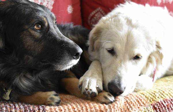 adozioni cani zampamica lecco